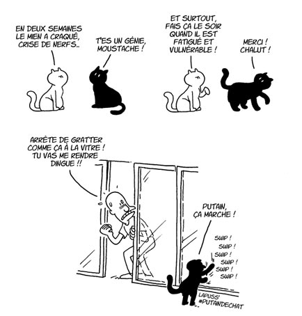 planche-chats